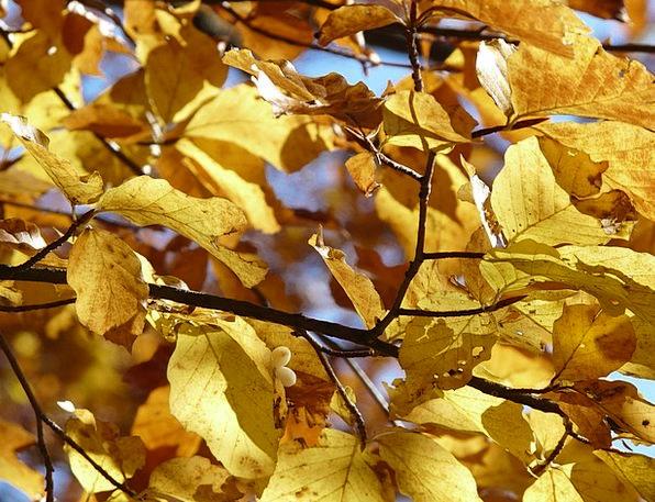 Beech Traffic Transportation Autumn Fall Beech Lea
