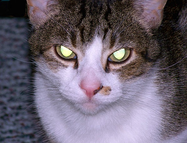 Cat Feline Wicked Eyes Judgments Evil Glowing Heal