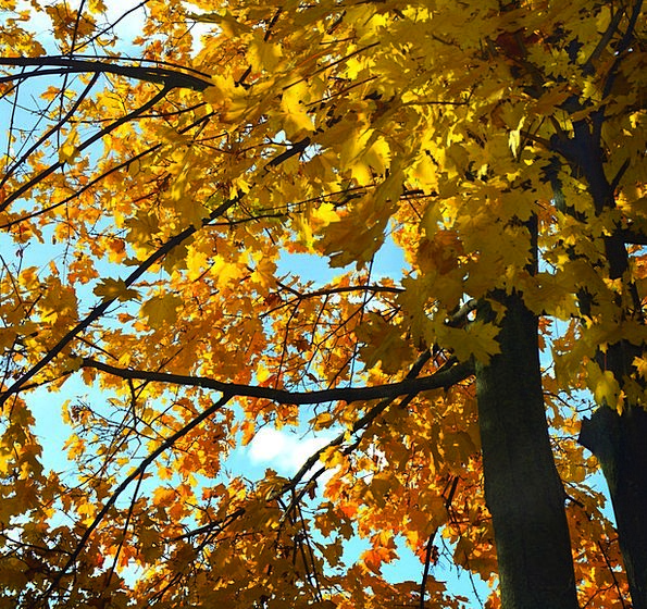 Autumn Fall Greeneries Color Hue Leaves