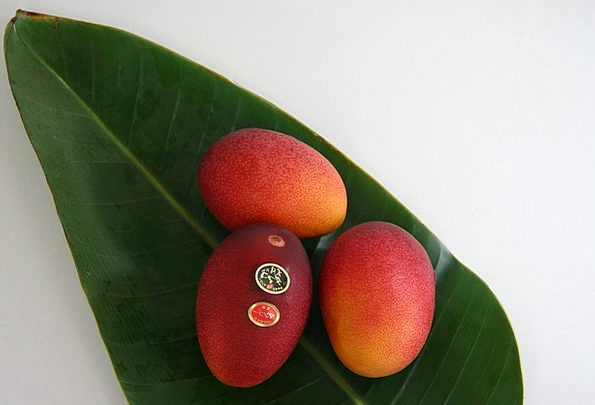 Fruit Ovary Drink Food Egg Of The Sun Mango Gift T