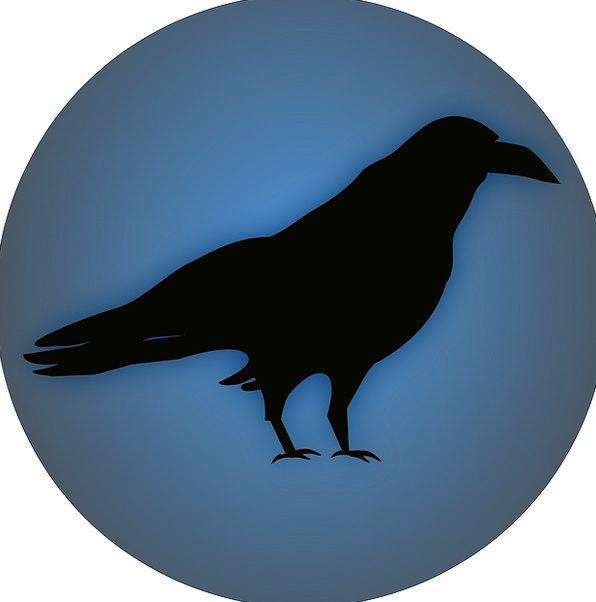 Raven Scoff Fowl Black Dark Bird Wild Rough Free V