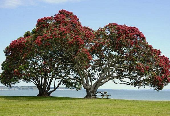 Tree Sapling Floret Red Flowers Flower Ironwood Tr