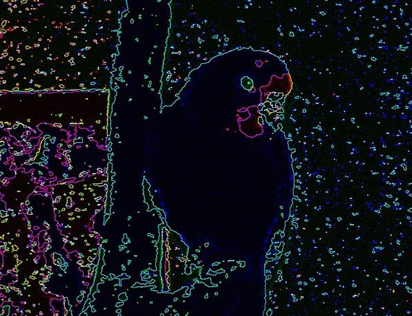 Parrots Imitators Imitator Tropical Hot Parrot Jun