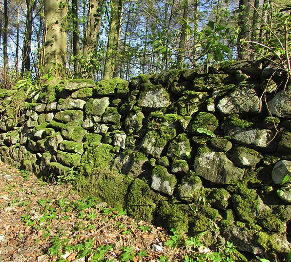 Wall Partition Landscapes Nature Old Wall Moss Lus