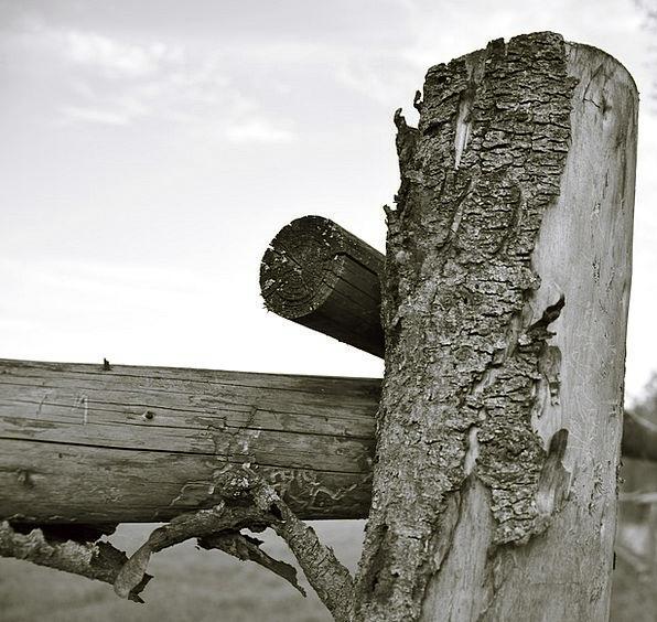 Wood Timber Barrier Bark Bay Fence Tree Sapling Tr