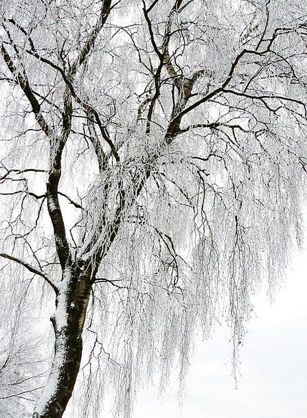 Winter Season Traffic Snowy Transportation Cold Em