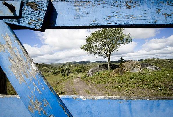 Nature Countryside Landscapes Caretaker Nature Tre
