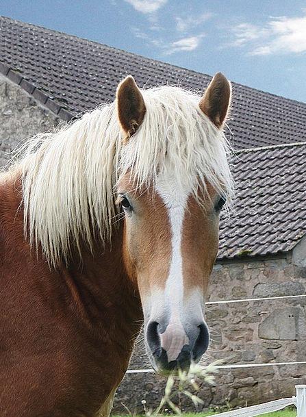 Horse Mount Faunae Animal Physical Animals Horses