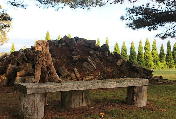 Dog Woods Farm Farmhouse Logs Firewood Wood Timber