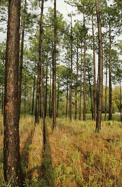 Savanna Grassland Landscapes Long Nature Wet Rainy