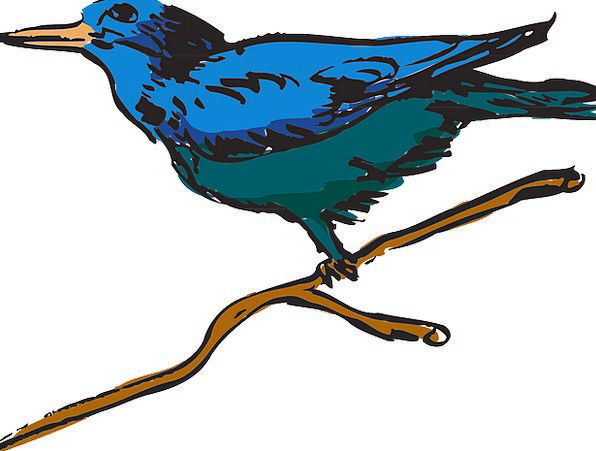 Blue Azure Fowl Wings Annexes Bird Feathers Downs