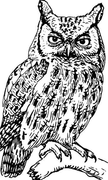 Owl Fowl Branch Division Bird Free Vector Graphics