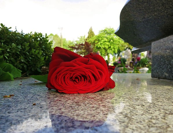 Beauty Loveliness Rose Bloom Red Rose Tombstone Gr