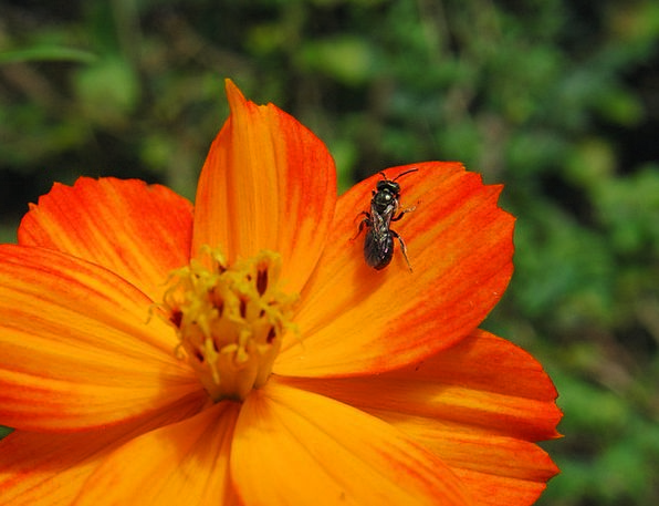 Flower Floret Landscapes Nature Orange Carroty Bee