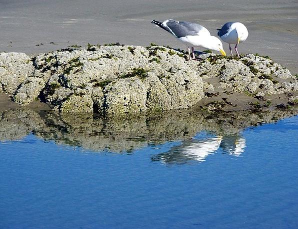 Birds Natures Vacation Travel Seagulls Gulls Beach