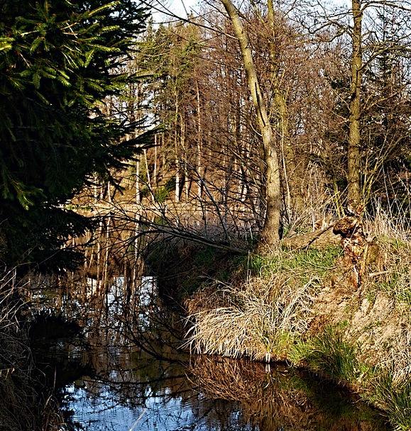 Pond Pool Landscapes Likeness Nature Trees Plants