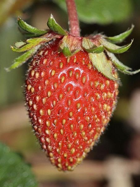 Strawberry Drink Food Food Nourishment Fragaria Ga