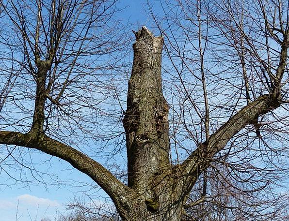 Tree Sapling Old Ancient Oak Canceled Irrecoverabl