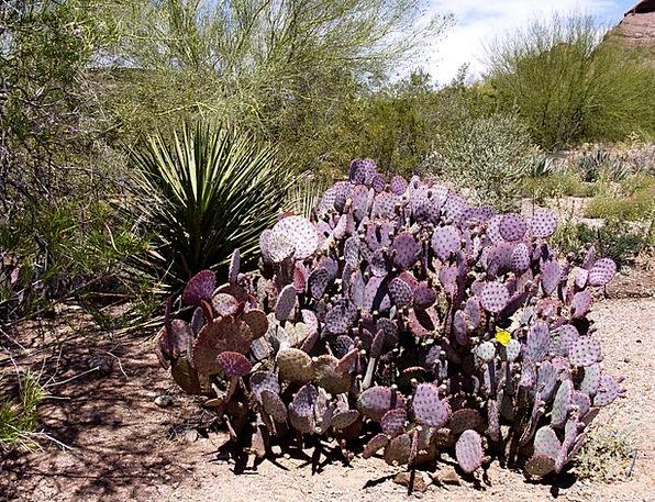 Cactus Landscapes Vegetable Nature Desert Reward P