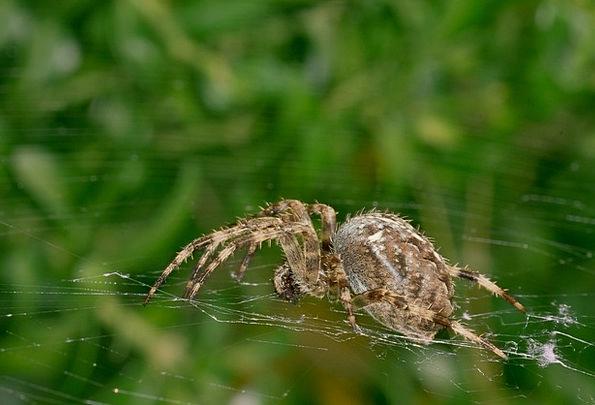 Spider Net Cobweb Network Insect Bug Nature Close