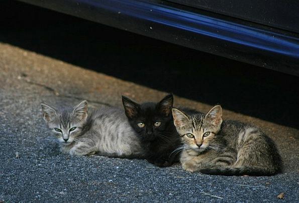 Kittens Felines Stray Cats Cats Pets Animals Cute