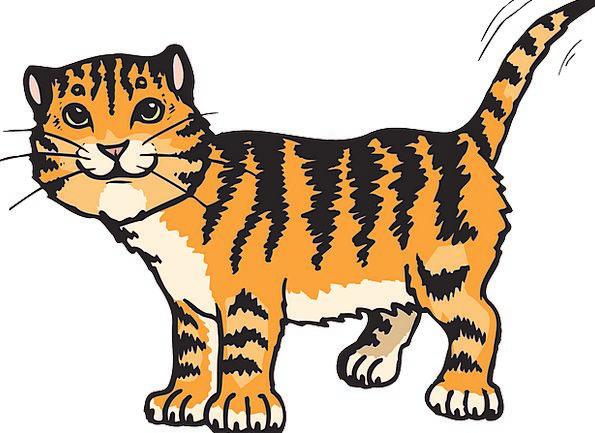 Cat Feline Strips Tiger Stripes Animal Physical Ta