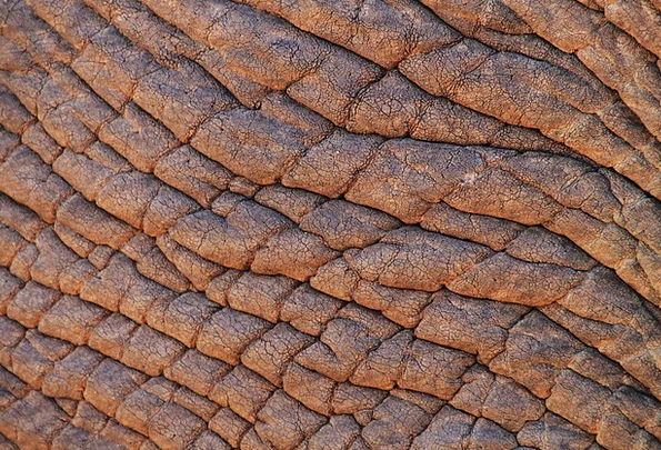 Elephant Skin Textures Monster Backgrounds African