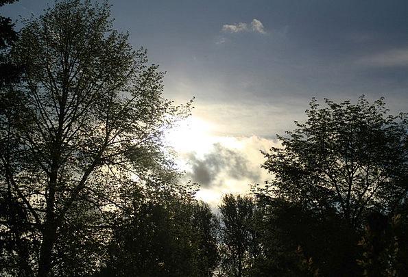Abendstimmung Vacation Sundown Travel Treetop Crow