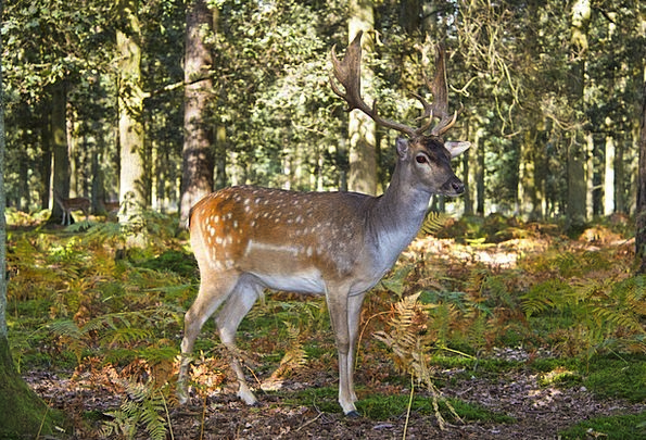 Red Deer Landscapes Rough Nature Hirsch Wild Hunti