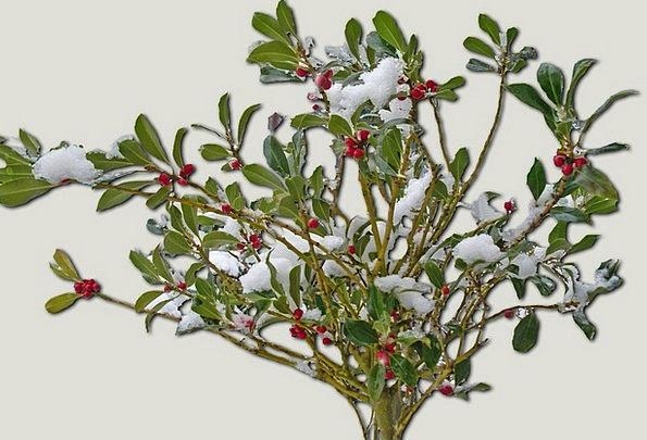 Winter Shrub Landscapes Season Nature Snow Snowfla