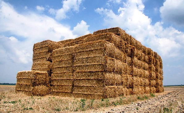 Indiana Landscapes Grass Nature Bales Bundles Stra