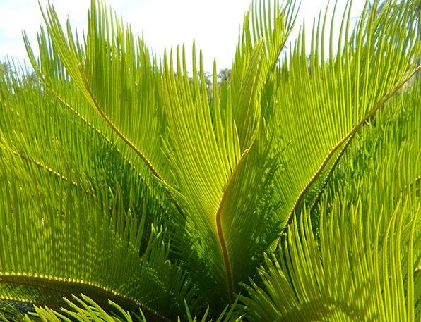 Palm Fronds Textures Part Backgrounds Close Near D