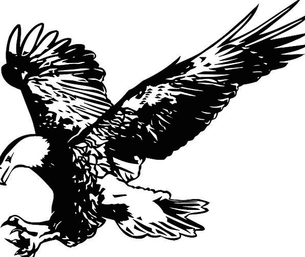 Eagle Birds Natures Black And White Feathers Birds