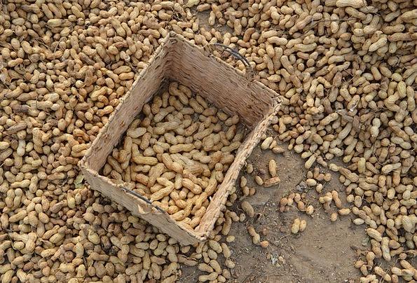 Peanuts Trifles Farmhouse Basket Bag Farm Drying V