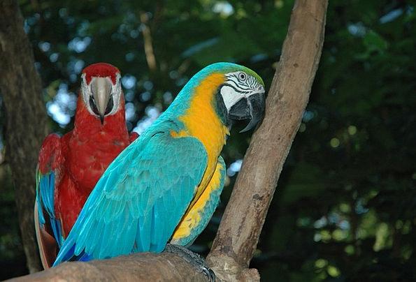 Ara Natures Brazil Birds