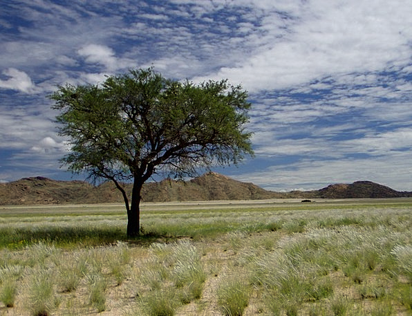 Namibia Vacation Travel Tree Sapling Africa Clouds