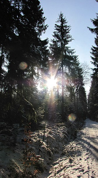 Winter Season Landscapes Nature Forest Woodland Ge
