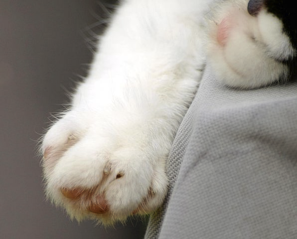 Cat'S Paw Cat Feline Paw Print Paw Hand