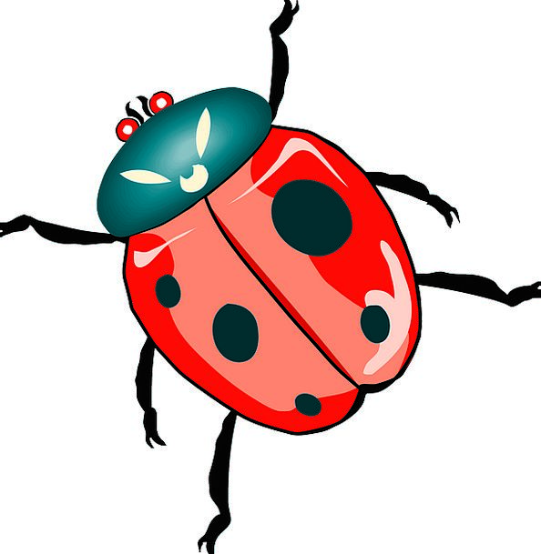 Ladybug Insect Ladybird Wings Spots Acnes Bug Ante