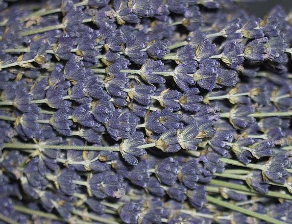 Lavender Violet Plants Lavender Flowers Flowers Sc