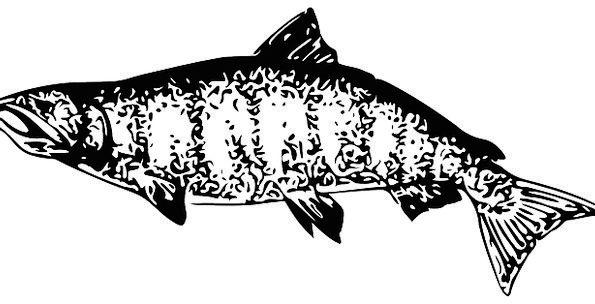 Salmon Drink Angle Food Food Nourishment Fish Wate