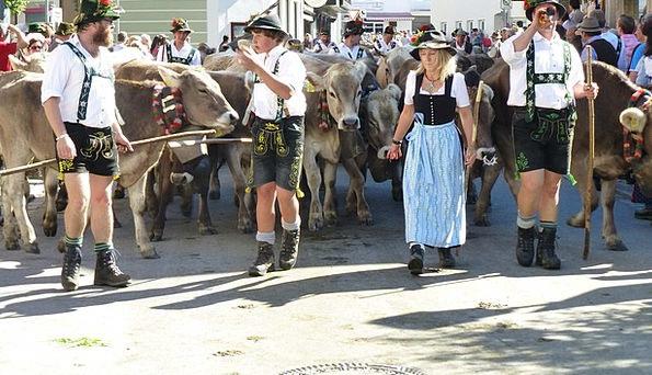 Allgäu Viehscheid Wertach Cows Intimidates Costume