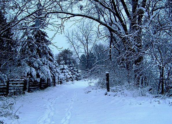 Winter Landscapes Snowflake Nature Trees Plants Sn