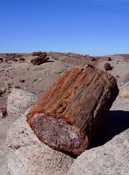 Petrified Tree Petrification Fossilization Arizona