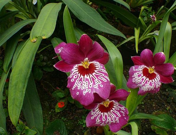 Orchid Landscapes Conservatory Nature Flower Flore