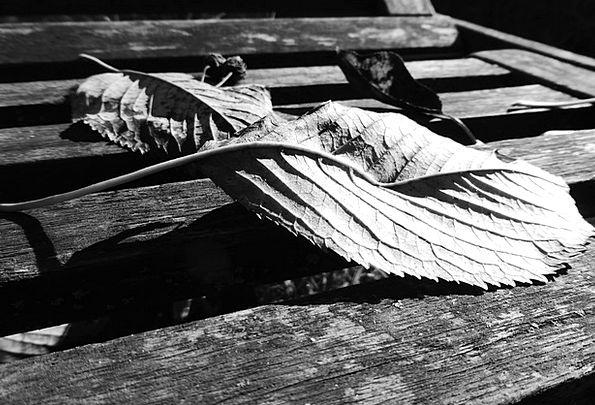 Leaves Greeneries Autumn Fall Autumn Mood