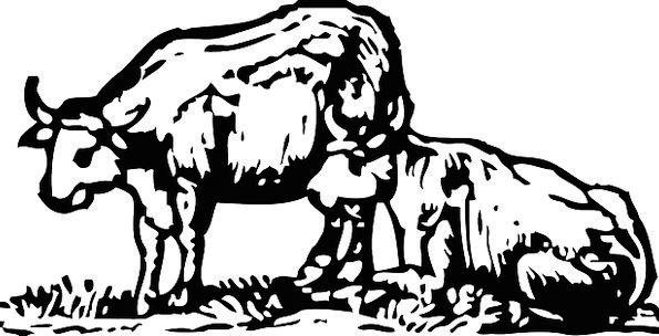 Ox Steer Decree Farm Farmhouse Bull Animals Faunae