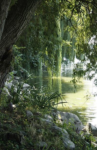 Pond Pool Sapling Reflection Likeness Tree Lipa Th