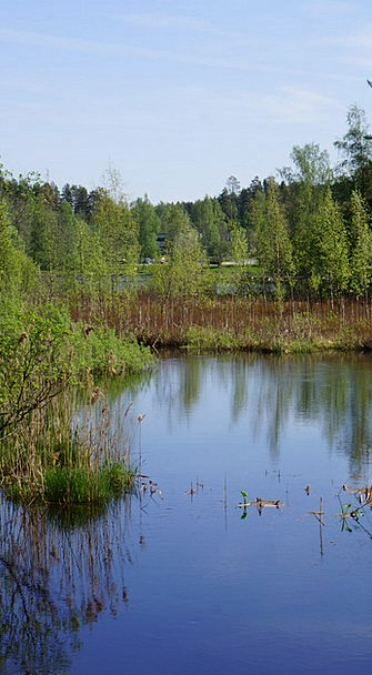 Finnish Landscapes Scenery Nature Swamp Marsh Land
