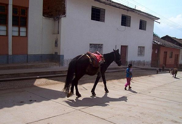 Horse Mount Horses Cattle Peru Animal Physical Liv